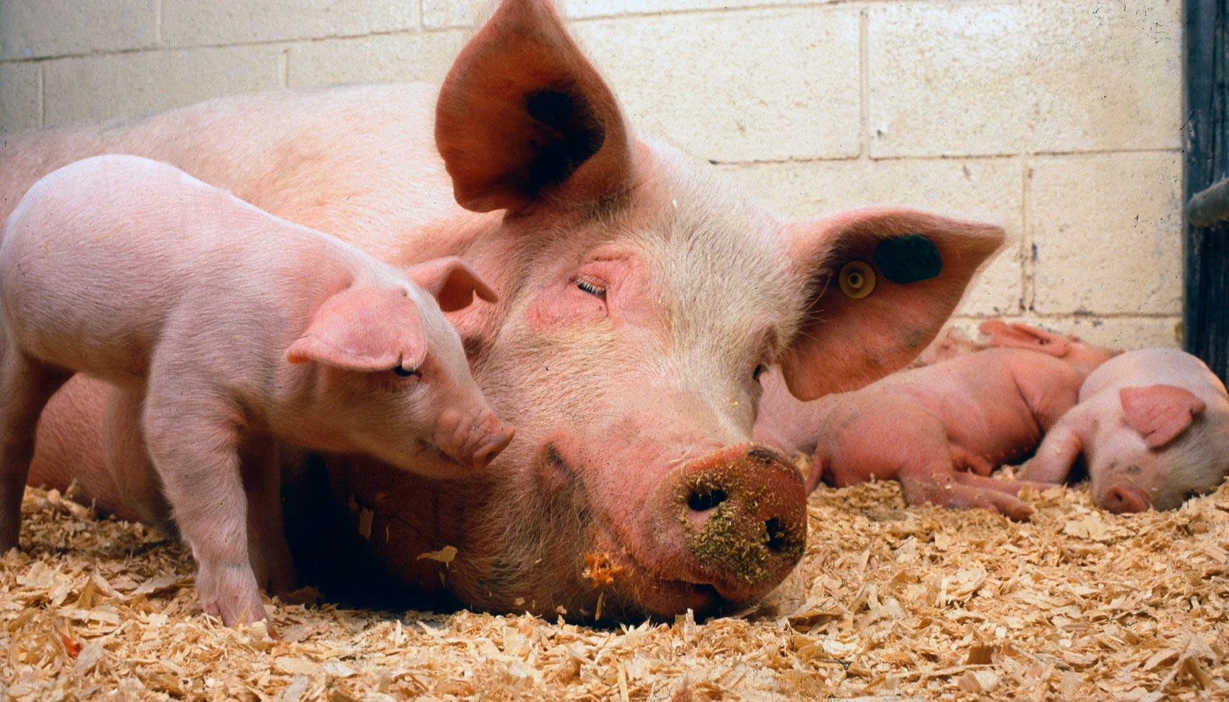Resultado de imagen para Bienestar animal: Explotaciones ganaderas